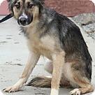 Adopt A Pet :: Mila
