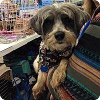 Adopt A Pet :: Simon - Sunset, LA