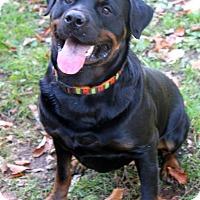 Adopt A Pet :: Oso - Rexford, NY
