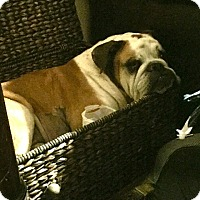 Adopt A Pet :: Dozer - Santa Ana, CA