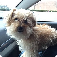 Adopt A Pet :: Toby - Lorain, OH