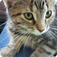 Adopt A Pet :: Little Josephine - Caistor Centre, ON