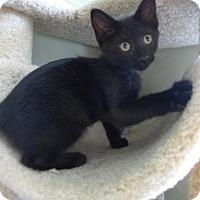 Adopt A Pet :: C-70074 Jasper - Westampton, NJ