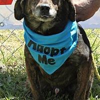 Adopt A Pet :: Bones - Grayson, LA
