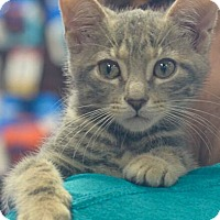 Adopt A Pet :: Spunky - Reston, VA