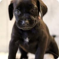 Adopt A Pet :: Trina - Waldorf, MD