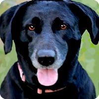 Adopt A Pet :: MAGGIE(HER OWNER DIED-PLS READ - Wakefield, RI
