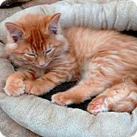 Adopt A Pet :: Desmond - Cloquet, MN