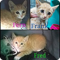 Adopt A Pet :: Fern, Frank & Fred - California City, CA