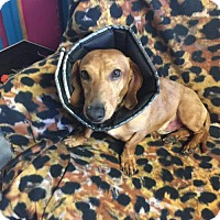 Adopt A Pet :: CJ - York, SC