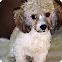 Adopt A Pet :: Jay - Tavares, FL
