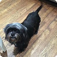 Adopt A Pet :: Pippa - Atlanta, GA