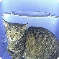 Adopt A Pet :: Edgar - haslet, TX