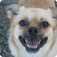 Adopt A Pet :: Lester - Columbia Falls, MT