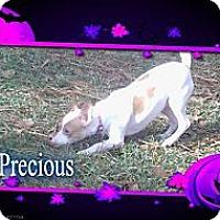 Adopt A Pet :: Precious - Lawrenceville, GA