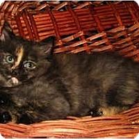 Adopt A Pet :: Terre - Oxford, NY