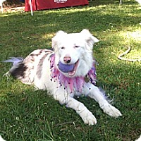 Adopt A Pet :: Blanca - Holly Springs, NC