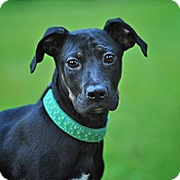 Adopt A Pet :: Jackson - Randolph, NJ