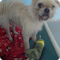 Adopt A Pet :: Norman
