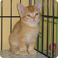 Adopt A Pet :: Candy - Island Park, NY