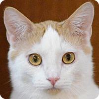 Adopt A Pet :: Sir Elton - Calgary, AB