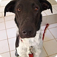 Adopt A Pet :: JADA - Hurricane, UT