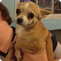 Adopt A Pet :: Melanie - Gilbert, AZ