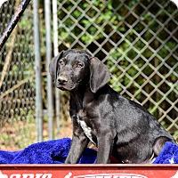 Adopt A Pet :: Jorge - Groton, MA
