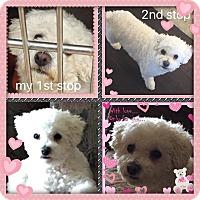 Adopt A Pet :: Wendy - IL - Tulsa, OK