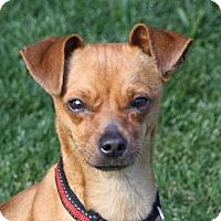 Adopt A Pet :: Gabby - Edmonton, AB