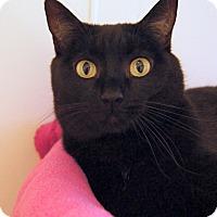 Adopt A Pet :: Dinah - Colorado Springs, CO