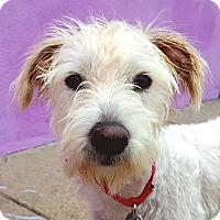 Adopt A Pet :: Lance - Los Angeles, CA