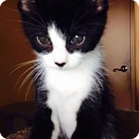 Adopt A Pet :: Tualla - Encinitas, CA