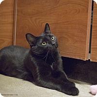 Adopt A Pet :: Geraldo - Toronto, ON