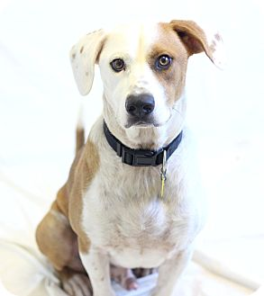 Hound (Unknown Type) Mix Dog for adoption in Bradenton, Florida - Murray