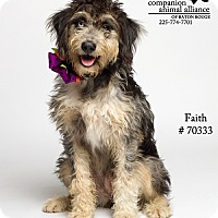 Adopt A Pet :: Faith  (Foster) - Baton Rouge, LA