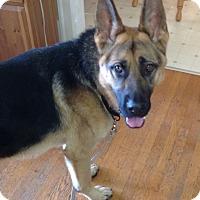 Adopt A Pet :: Hans - Woodinville, WA
