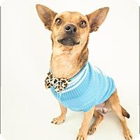 Adopt A Pet :: BOO! - Phoenix, AZ