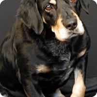 Adopt A Pet :: Payton - Newland, NC
