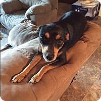 Adopt A Pet :: Cindy - Kittery, ME