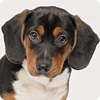 Adopt A Pet :: Palen - Westfield, NY