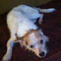 Adopt A Pet :: TINY - Tonopah, AZ