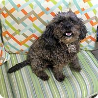 Adopt A Pet :: Grover - Waco, TX
