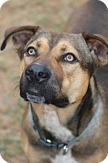 German Shepherd Dog Mix Dog for adoption in Tampa, Florida - Chance