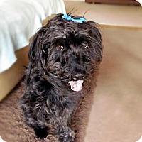 Adopt A Pet :: Lucky - Chattanooga, TN