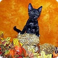 Adopt A Pet :: Ashlynn - Orlando, FL