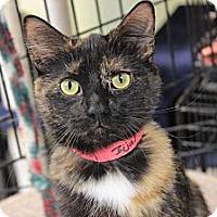 Adopt A Pet :: Bijal - Byron Center, MI