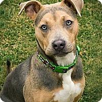 Adopt A Pet :: Gemma - West Richland, WA