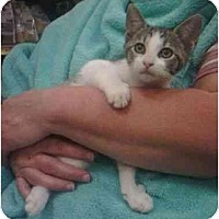 Adopt A Pet :: Twitter - Reston, VA
