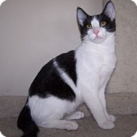 Adopt A Pet :: K-Sitka4-Tika - Colorado Springs, CO
